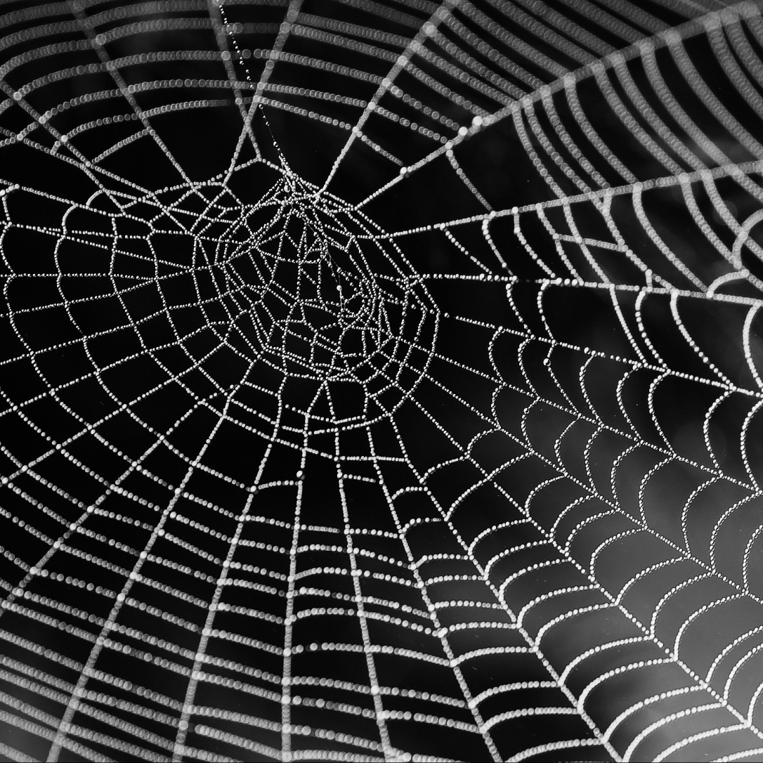 black-and-white-close-up-cobweb-34225