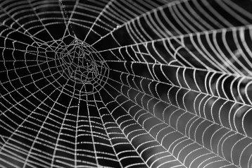 black-and-white-close-up-cobweb-34225