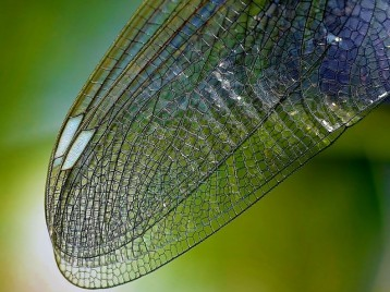 Nature Wing Close Texture Insect Dragonfly Wing