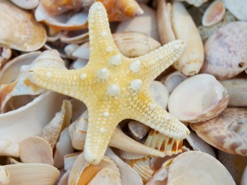 pile-of-seashells